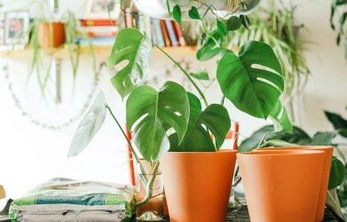 indoorplantpot1 tanaman hias